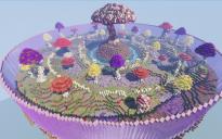 Mushroom arena 1 (top down)